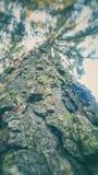 Árbol bajo luz del sol Fotos de archivo