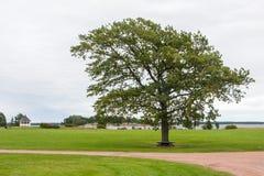 Árbol, banco, hierba, camino, y cielo solos fotos de archivo