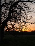 Árbol bien proporcionado en la puesta del sol Foto de archivo libre de regalías