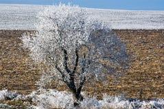 Árbol blanco Foto de archivo libre de regalías