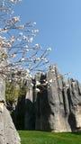 Árbol blanco del flor del bosque de piedra de Shilin Fotografía de archivo
