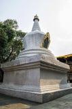 Árbol blanqueado grande del stupa y del bodhi en el primer patio de Punakha Dzong, Bhután Imágenes de archivo libres de regalías
