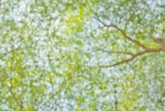 Árbol borroso Imagen de archivo