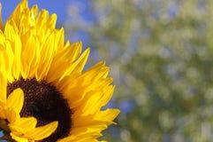 Árbol borroso Imagen de archivo libre de regalías