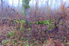 Árbol caido Fotografía de archivo libre de regalías