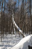 Árbol caido Foto de archivo