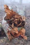 Árbol caido. fotos de archivo