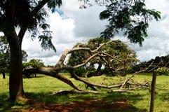 Árbol caido foto de archivo libre de regalías