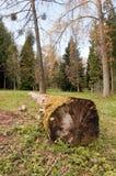 Árbol caido Fotos de archivo
