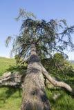 Árbol caido Imagen de archivo