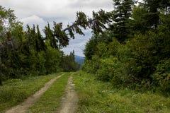 Árbol caido adentro en el bosque Fotografía de archivo libre de regalías