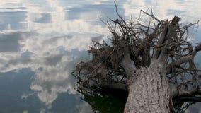 Árbol caido con las raíces en el lago