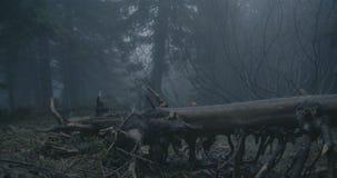 Árbol caido con las ramas con curvas en un bosque oscuro en los Cárpatos en el slo-MES almacen de video