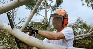 Árbol caido corte del leñador en el bosque 4k almacen de metraje de vídeo