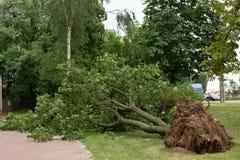 Árbol caido del viento Tormenta en ciudad Imagen de archivo