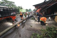 Árbol caido desastres Foto de archivo