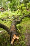 Árbol caido después de la tormenta Fotos de archivo libres de regalías