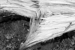 Árbol caido después de la tormenta Imagen de archivo