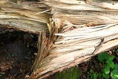 Árbol caido después de la tormenta Foto de archivo