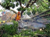 Árbol caido después de una tempestad de truenos pesada Imagen de archivo