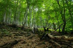 Árbol caido en bosque de la montaña Fotos de archivo libres de regalías