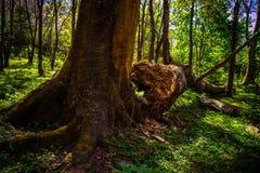 Árbol caido en el bosque en Phu Thap Boek imágenes de archivo libres de regalías