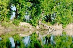 Árbol caido en el lago Fotografía de archivo