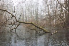 Árbol caido en el lago congelado Fotografía de archivo