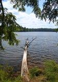 Árbol caido en el lago wilderness Fotografía de archivo