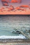 Árbol caido en el mar Foto de archivo libre de regalías