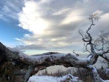 Árbol caido en el rastro de McHugh Foto de archivo libre de regalías