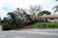 Árbol caido en Fullerton 4 Foto de archivo libre de regalías