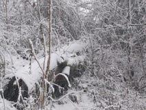 Árbol caido en invierno Foto de archivo
