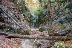 árbol caido en la barranca Foto de archivo