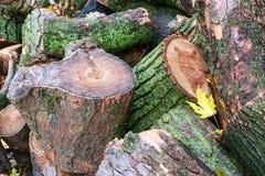 Árbol caido en la ciudad Pila de trozos de madera Fotos de archivo libres de regalías