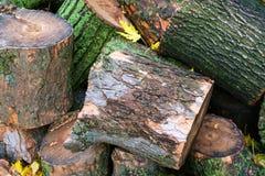 Árbol caido en la ciudad Pila de trozos de madera Fotos de archivo
