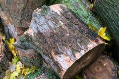 Árbol caido en la ciudad Pila de trozos de madera Fotografía de archivo libre de regalías