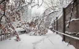 Árbol caido en la nieve del perímetro de seguridad fotos de archivo libres de regalías