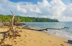 Árbol caido en la playa Imagenes de archivo
