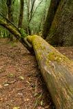 Árbol caido en las maderas Imagen de archivo libre de regalías