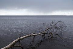 Árbol caido en un lago Imagenes de archivo
