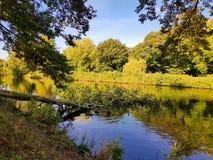 Árbol caido en un río en otoño Imagen de archivo libre de regalías