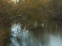 Árbol caido mitad en el río Fotografía de archivo