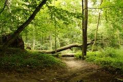 Árbol caido sobre el camino Imagen de archivo