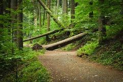 Árbol caido sobre el camino Foto de archivo libre de regalías