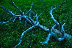 Árbol caido viejo Fotografía de archivo