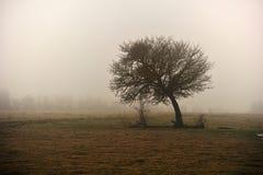 Árbol calvo Imagenes de archivo