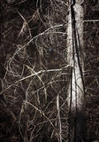 Árbol calvo Fotos de archivo