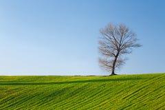 Árbol, campo y cielo azul Fotos de archivo libres de regalías
