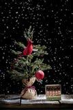 Árbol cardinal de la Navidad y regalo de la Feliz Navidad foto de archivo libre de regalías